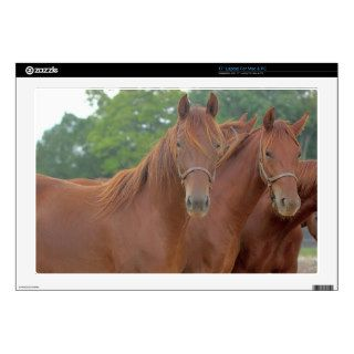 "Beautiful Chestnut Bay Brown Horses Decal For 17"" Laptop"