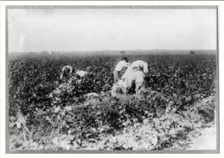 Historic Print (L) Scene in the cotton field of the Baptist Orphanage, near Waxahachie. These boys, from se