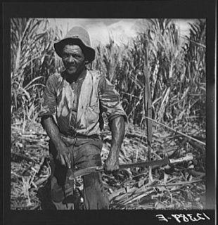Photo Sugar worker sharpening his machete. On sugar plantation near Ponce, Puerto Rico   Prints