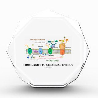 From Light To Chemical Energy (Photosynthesis) Award